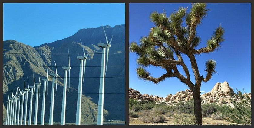 Windmills and a Lone Joshua