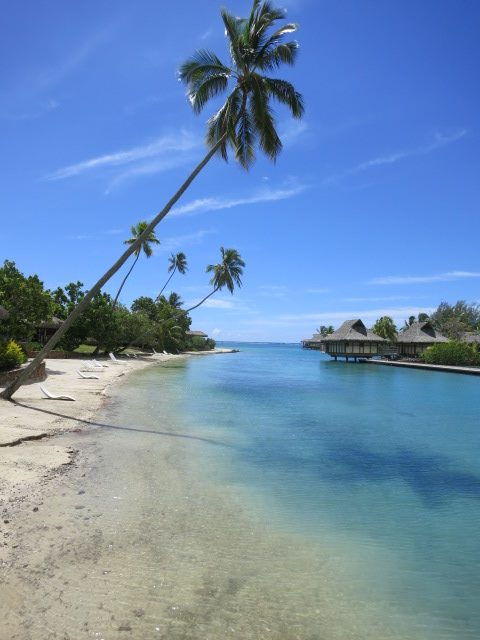 The Moorea palm lean above crystal-clear aquamarine waters