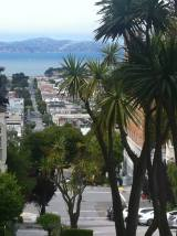 Near the Lyon Street Stairs in Pacific Heights/Presidio.